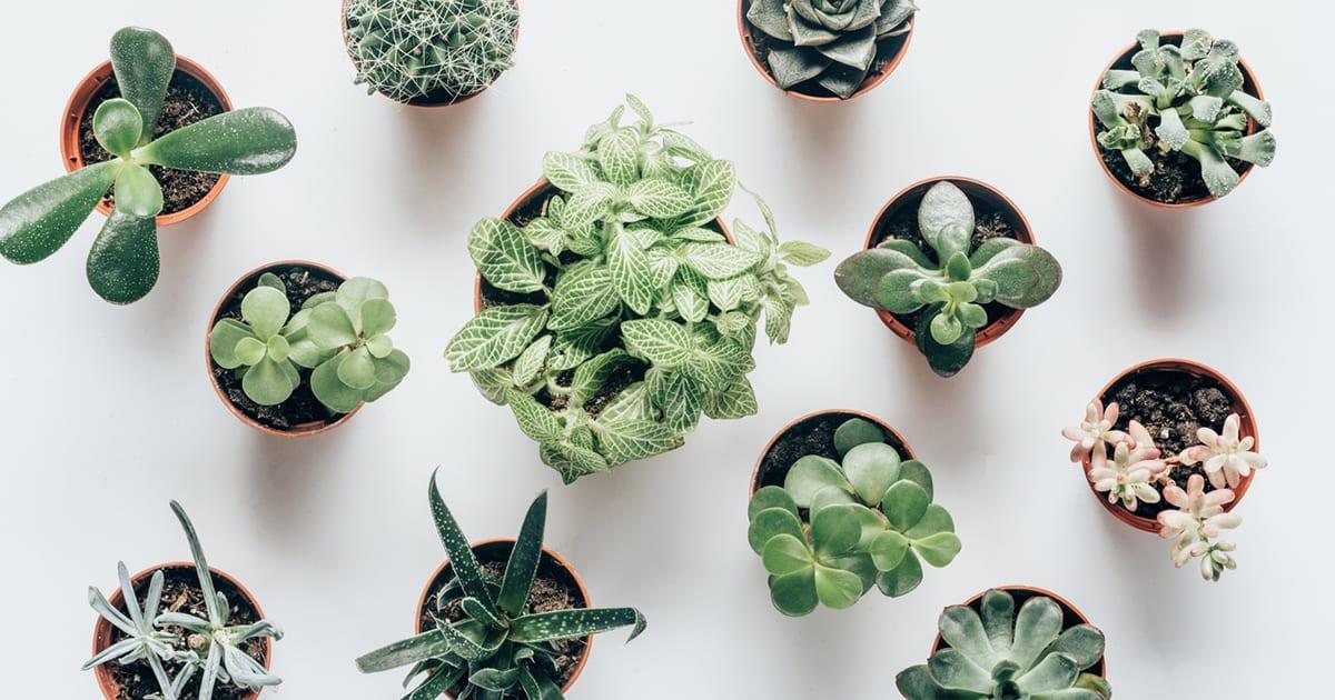 Expert Tips On The Best Soil For Snake Plants