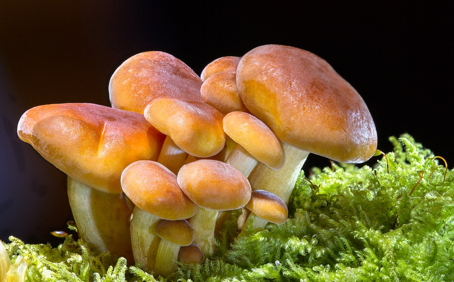 Your Ultimate Go-To Guide For Shrooms Edibles Online Canada