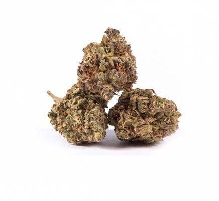 Acquire the best strains of legal cannabis (cannabis legale)